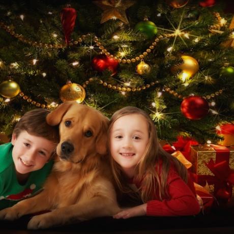 Christmas card studio shoot, Enfield_020
